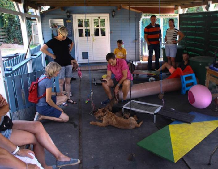 Zukünftige welpeneltern im Welpenpark bei den Haseländern