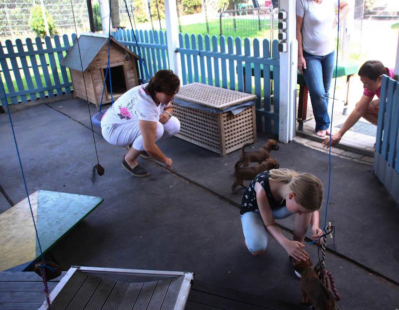 WElpenbesuchtag Kinder spielen mit den Welpen