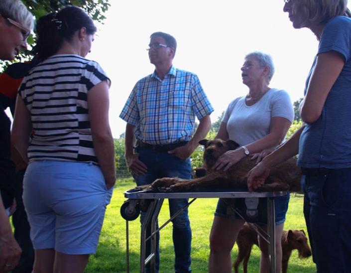 Irish Terrier Welpenbesuchtstag vom Haseland-Irish Terrier Trimming