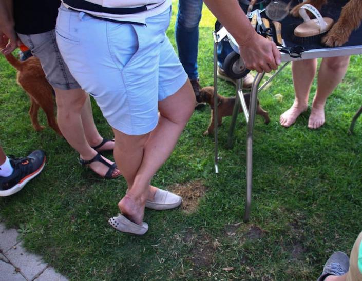 Irish Terrier Welpenbesuchtstag vom Haseland-ish terrier Tischtraining
